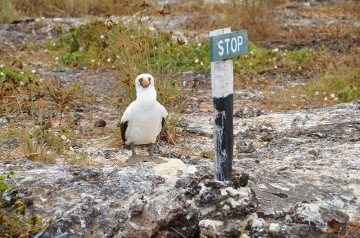 booby and stop sign