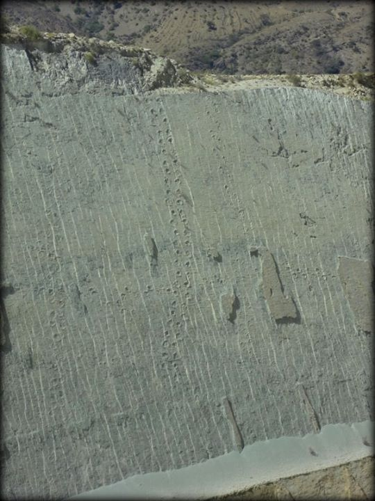 the dinosaur footprints zoomed in...