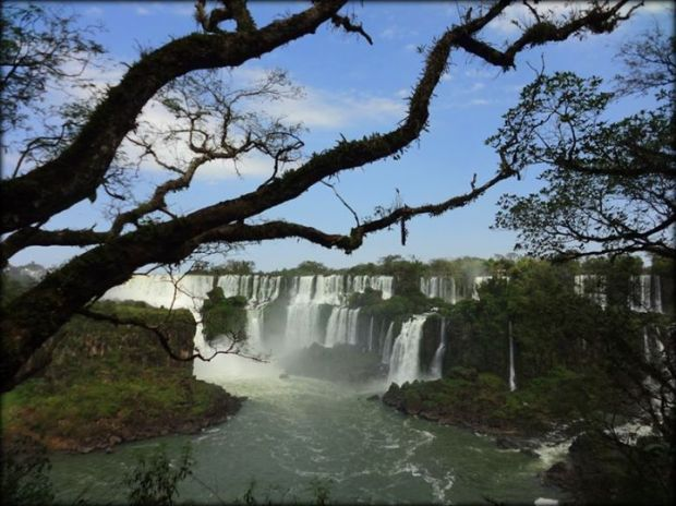 falls and trees