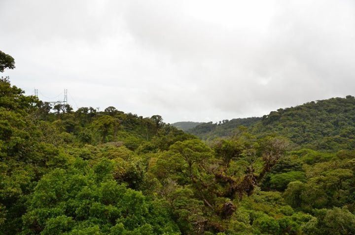 the forest canopy, though this photo didn't quite capture its awesomeness