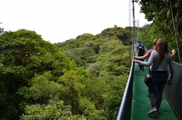 one of the hanging bridges in Monteverde forest