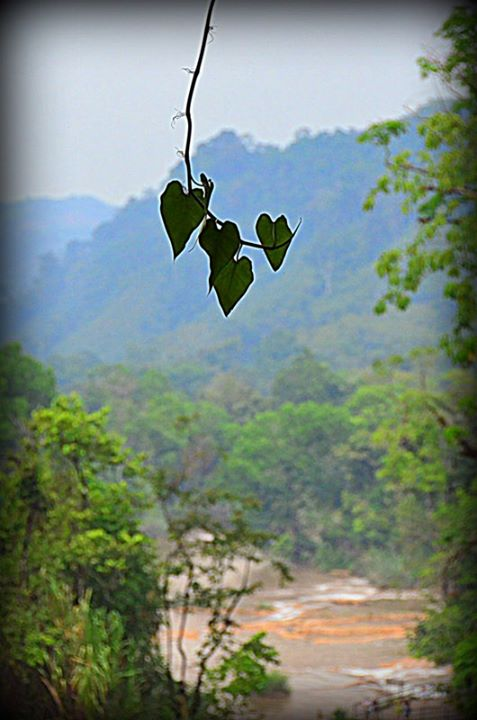 hearts leaves