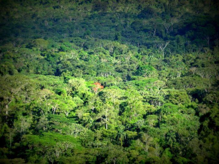 pristine jungle