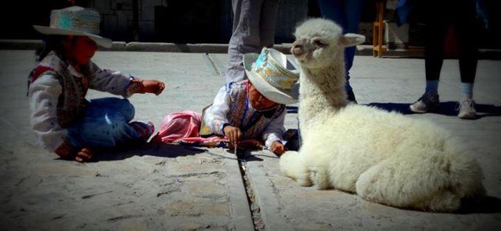 kids and llama