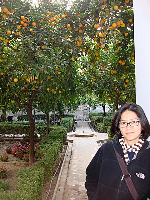 orange garden, Seville