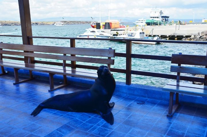 the welcome sea lion at the dock :-)