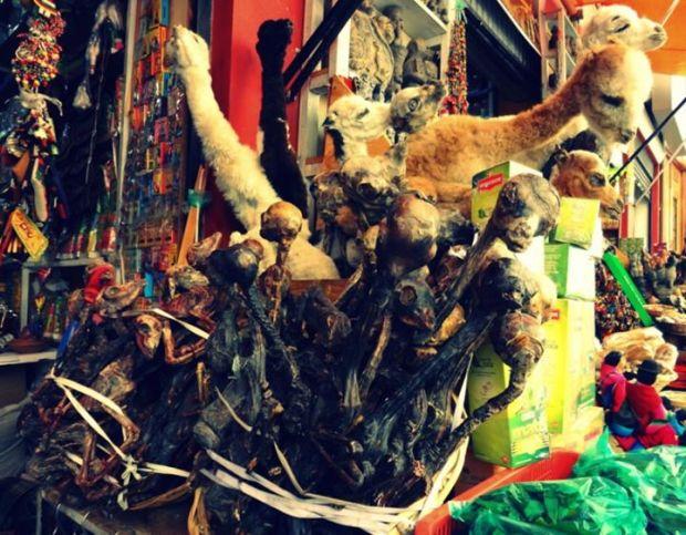 witch market dried llama