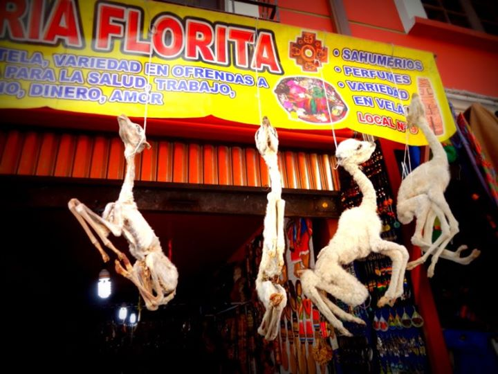 dried llama fetuses in the Witches' Market