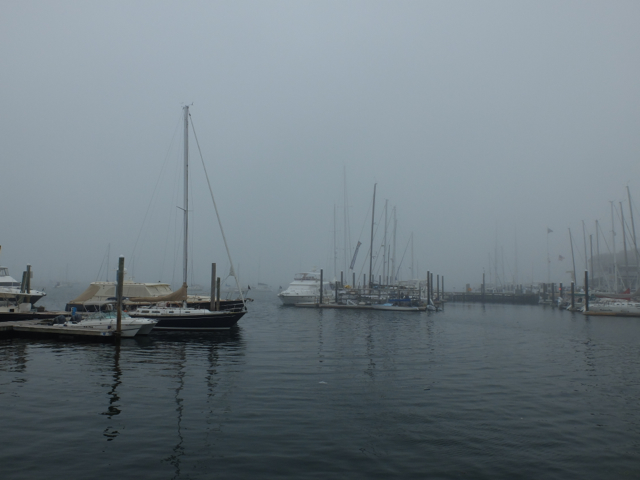 newport fog