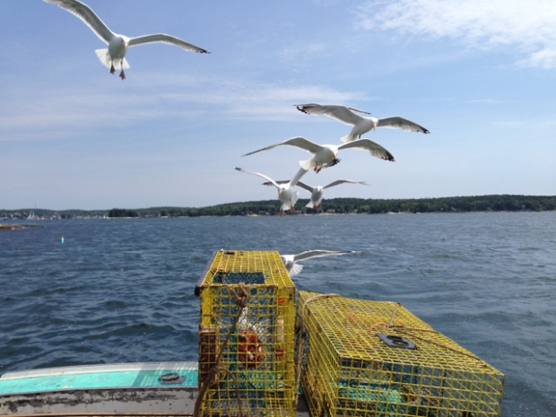 seagulls and lobster traps